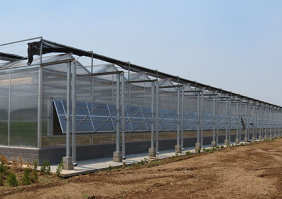 昌乐优质简易大棚建设-丰力温室工程