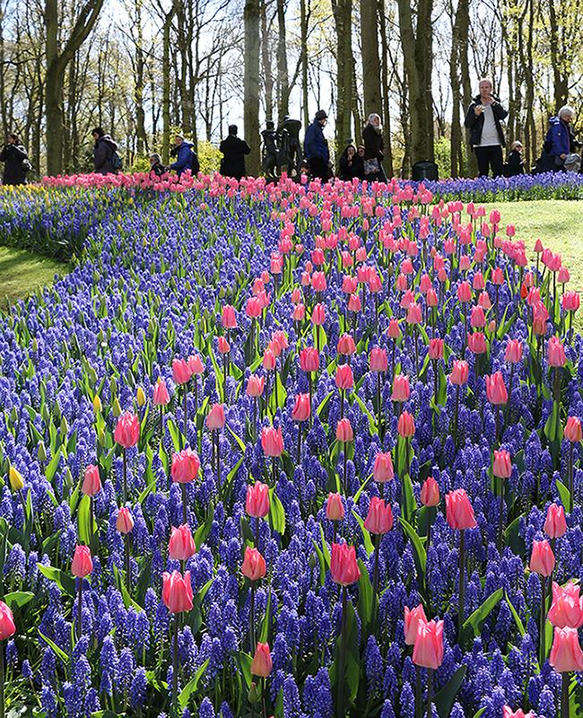 采用简种,套种的公园景观设计模式,让整个景区的花期衔接更为自然流畅
