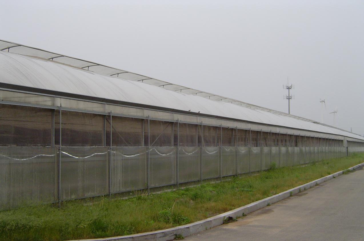 山東蔬菜溫室施工-沈陽藍天溫室