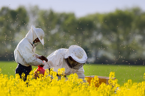 安徽頂級桶裝烏桕蜜哪家好-蒙城養蜂合作社