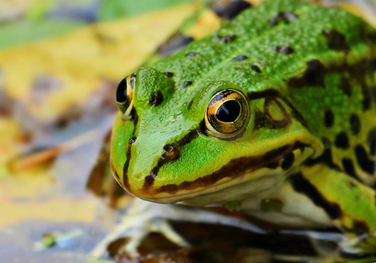 沛县专业青蛙养殖基地市场价格