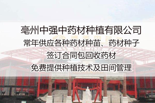 广西丹参的种植报价