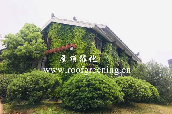 重庆园林立体绿化种植墙订购