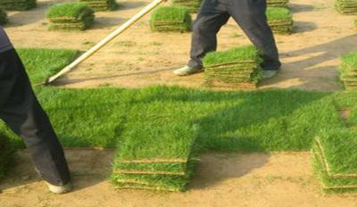 貴溪智能綠化公司