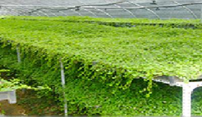 贛縣屋頂隔熱辦法種植基質