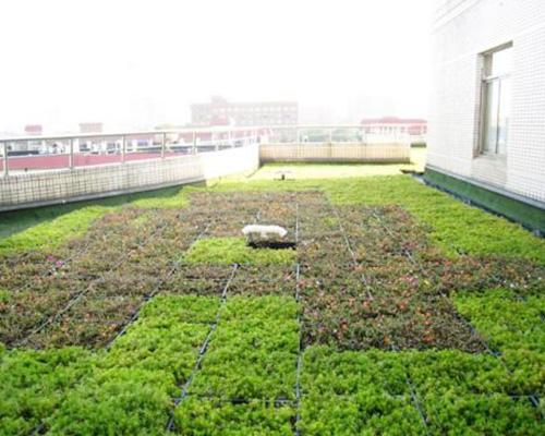 屋顶绿化植物_绿化屋顶构造_广州 屋顶 绿化